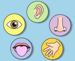 تلقين – درس عن الحواس الخمسة – علي أسعد وطفة
